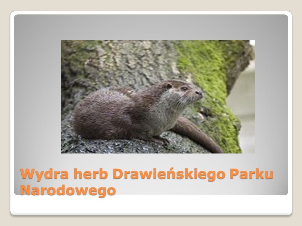 Wydra herb Drawieńskiego Parku Narodowego