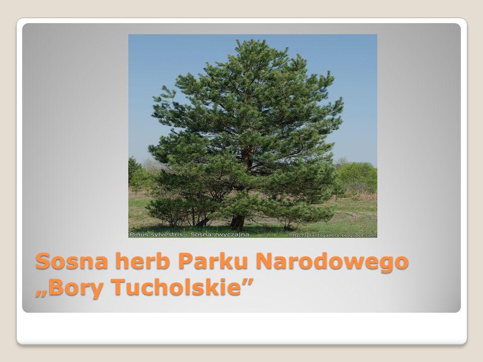 "Sosna herb Parku Narodowego ""Bory Tucholskie"