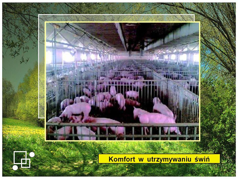 Komfort w utrzymywaniu świń