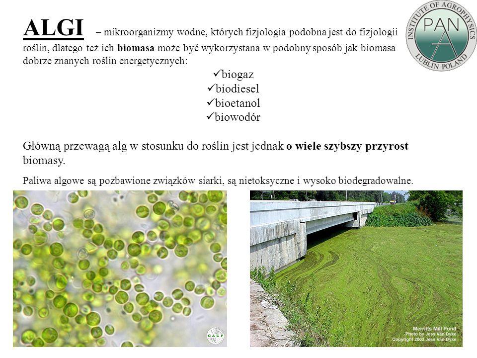 ALGI – mikroorganizmy wodne, których fizjologia podobna jest do fizjologii