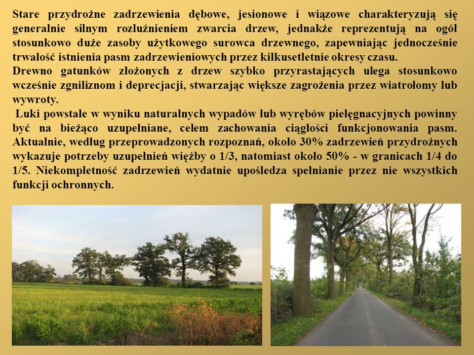 Stare przydrożne zadrzewienia dębowe, jesionowe i wiązowe charakteryzują się generalnie silnym rozluźnieniem zwarcia drzew, jednakże reprezentują na ogół stosunkowo duże zasoby użytkowego surowca drzewnego, zapewniając jednocześnie trwałość istnienia pasm zadrzewieniowych przez kilkusetletnie okresy czasu.