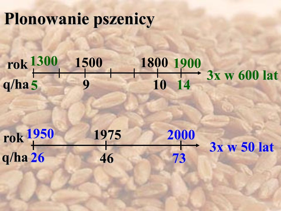 Plonowanie pszenicy 1300 rok 1500 1800 1900 3x w 600 lat q/ha 5 9 10