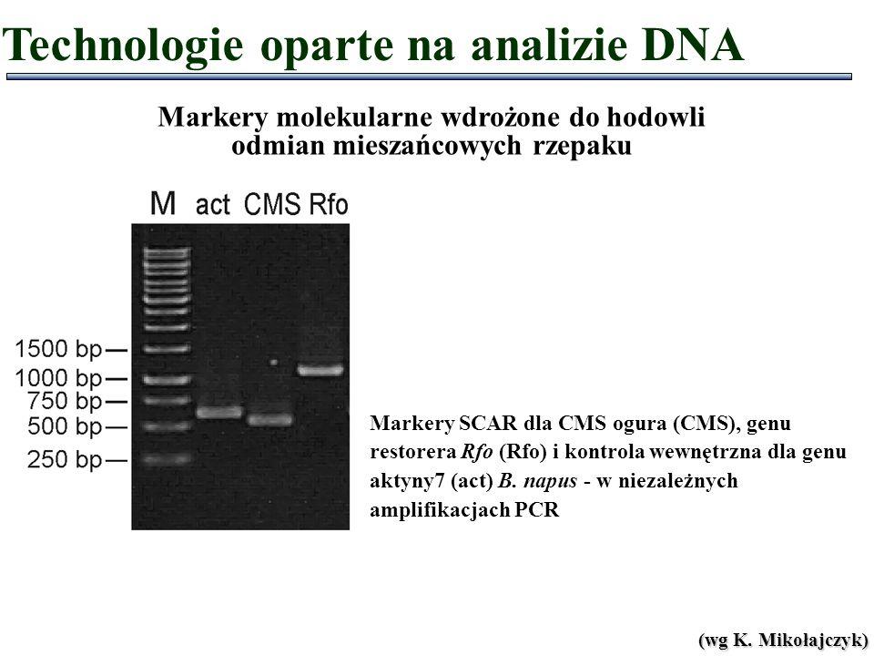 Markery molekularne wdrożone do hodowli odmian mieszańcowych rzepaku