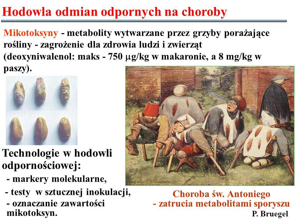 - zatrucia metabolitami sporyszu