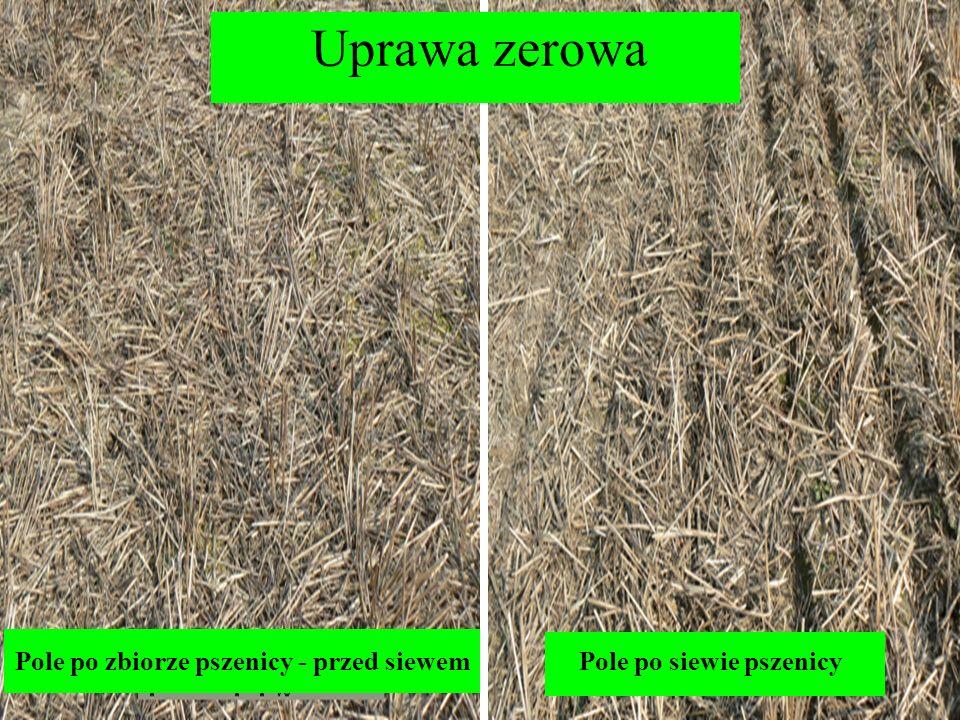 Uprawa zerowa Pole po zbiorze pszenicy - przed siewem