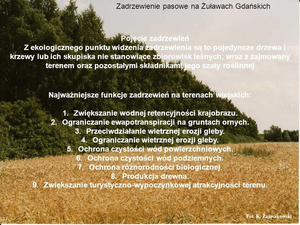 Zadrzewienie pasowe na Żuławach Gdańskich