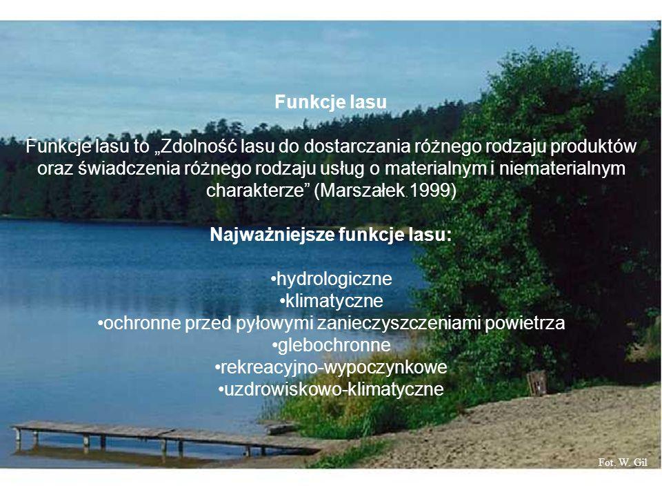 Najważniejsze funkcje lasu: