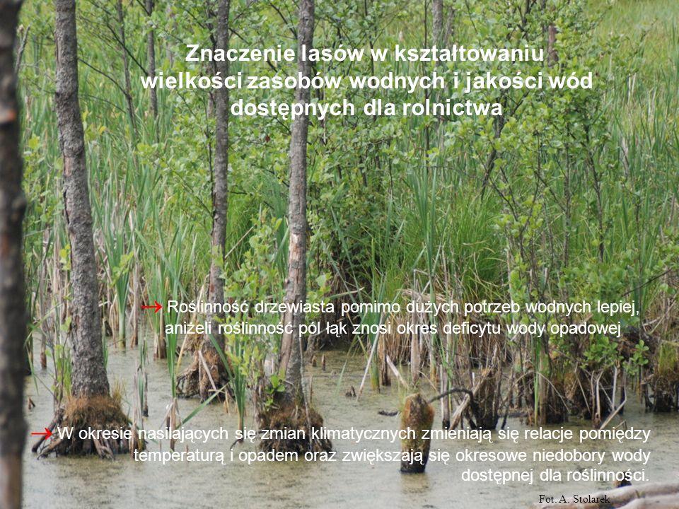 Znaczenie lasów w kształtowaniu
