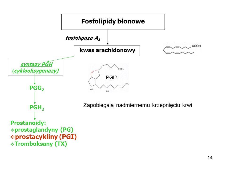 Fosfolipidy błonowe prostacykliny (PGI) kwas arachidonowy syntazy PGH