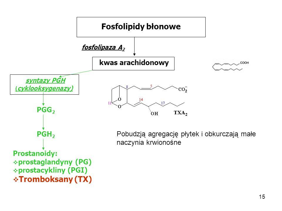 Fosfolipidy błonowe Tromboksany (TX) kwas arachidonowy syntazy PGH