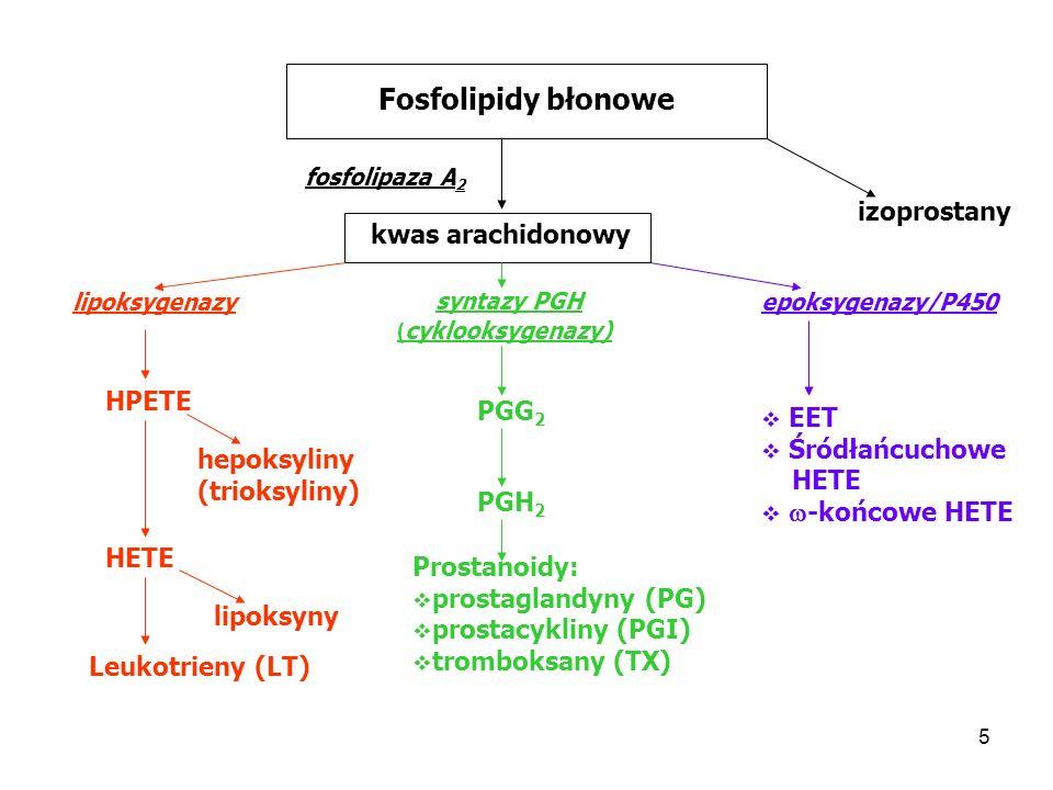 Fosfolipidy błonowe izoprostany kwas arachidonowy syntazy PGH HPETE