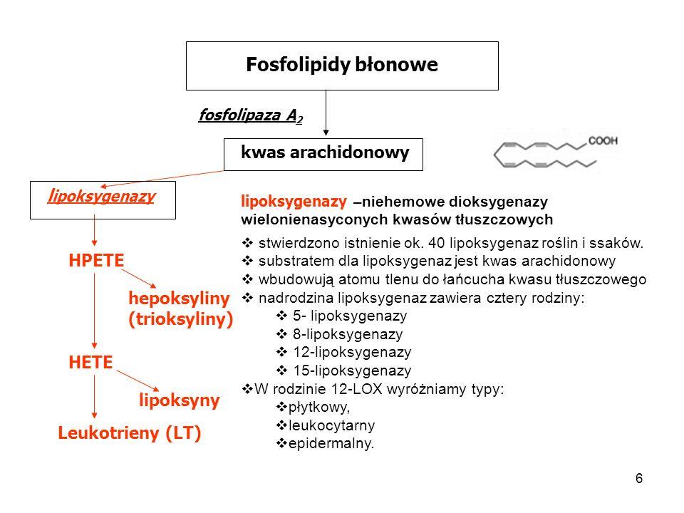 Fosfolipidy błonowe kwas arachidonowy lipoksygenazy HPETE hepoksyliny