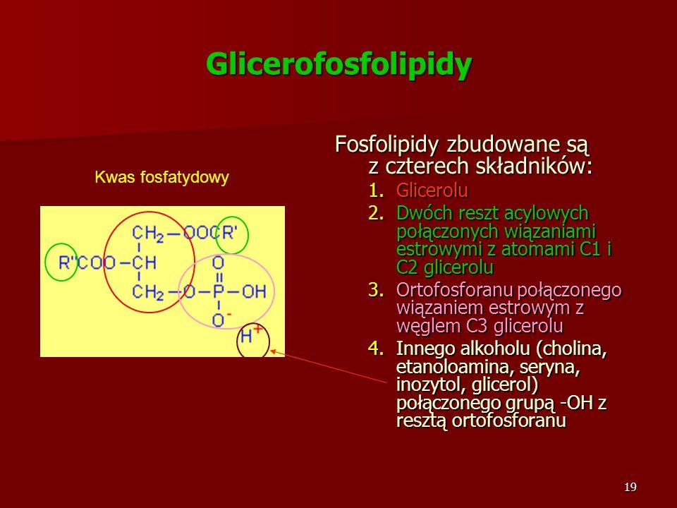 Glicerofosfolipidy Fosfolipidy zbudowane są z czterech składników: