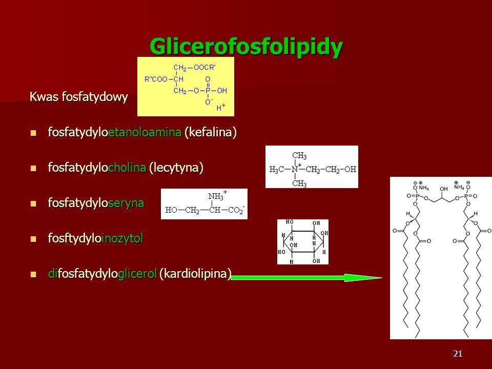 Glicerofosfolipidy Kwas fosfatydowy fosfatydyloetanoloamina (kefalina)