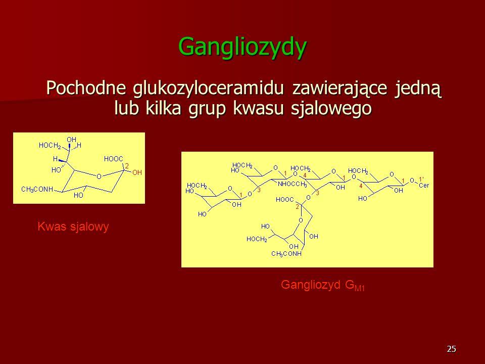 Gangliozydy Pochodne glukozyloceramidu zawierające jedną lub kilka grup kwasu sjalowego. Kwas sjalowy.