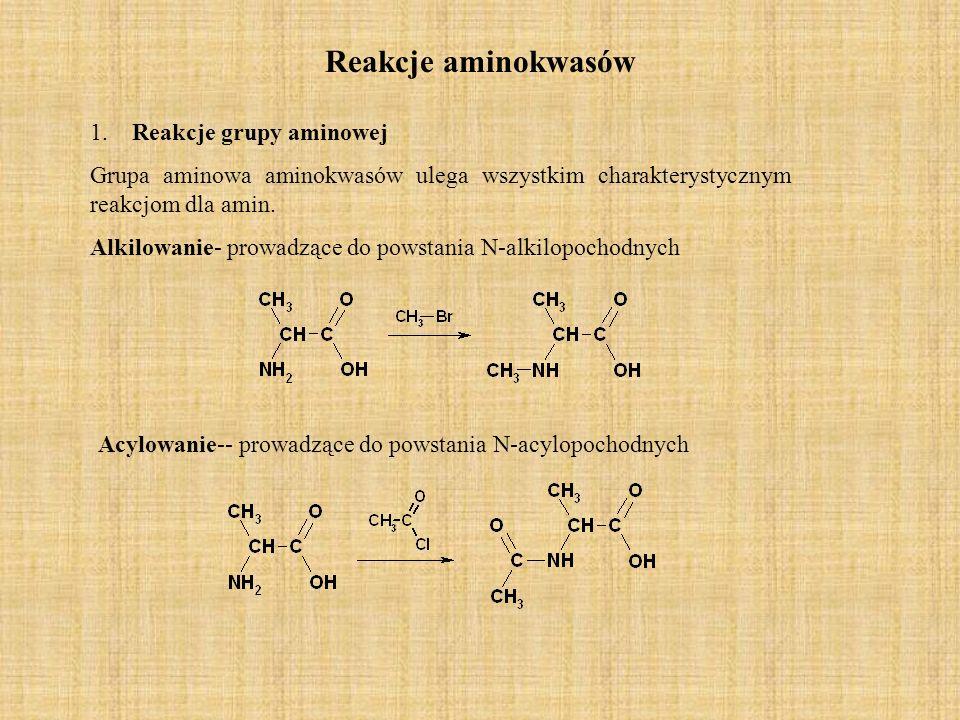 Reakcje aminokwasów 1. Reakcje grupy aminowej