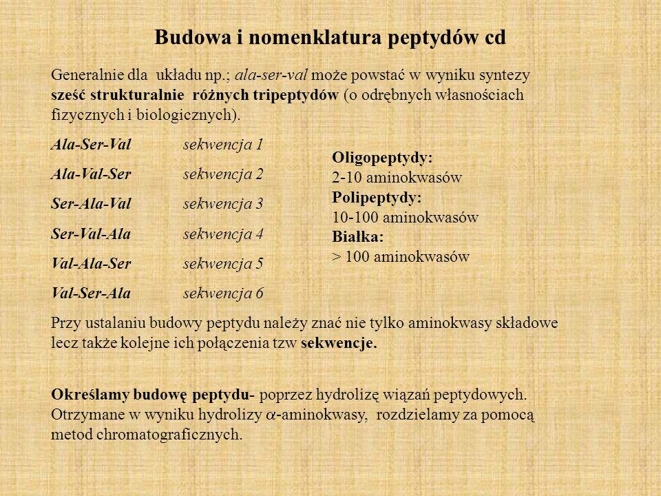 Budowa i nomenklatura peptydów cd