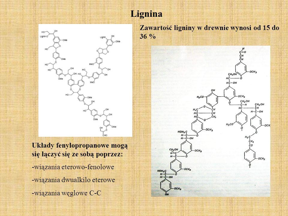 Lignina Zawartość ligniny w drewnie wynosi od 15 do 36 %
