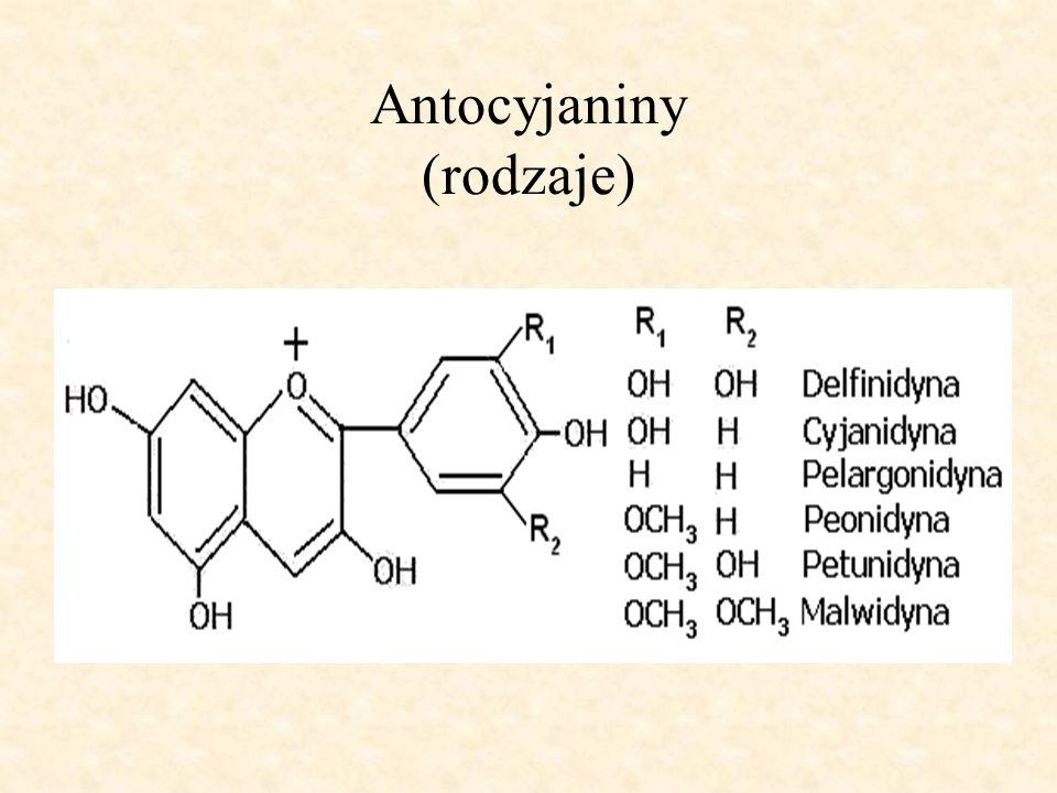 Antocyjaniny (rodzaje)
