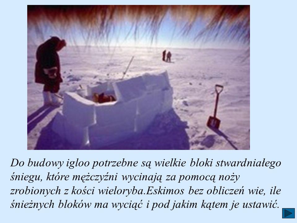 Do budowy igloo potrzebne są wielkie bloki stwardniałego śniegu, które mężczyźni wycinają za pomocą noży zrobionych z kości wieloryba.Eskimos bez obliczeń wie, ile śnieżnych bloków ma wyciąć i pod jakim kątem je ustawić.