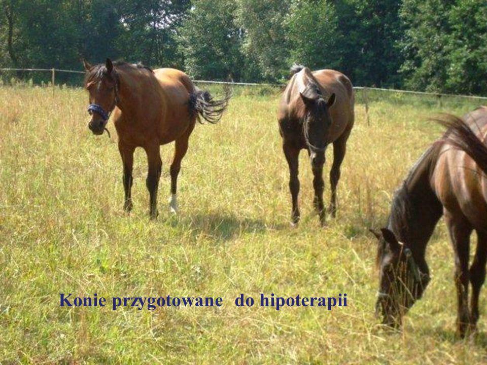 Konie przygotowane do hipoterapii