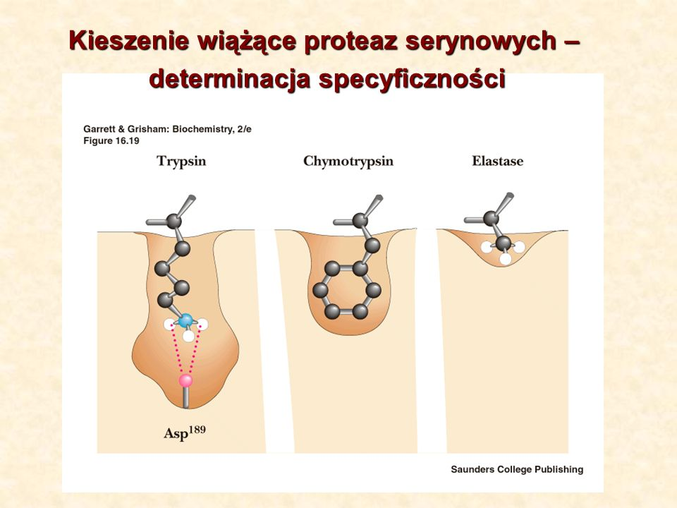 Kieszenie wiążące proteaz serynowych –