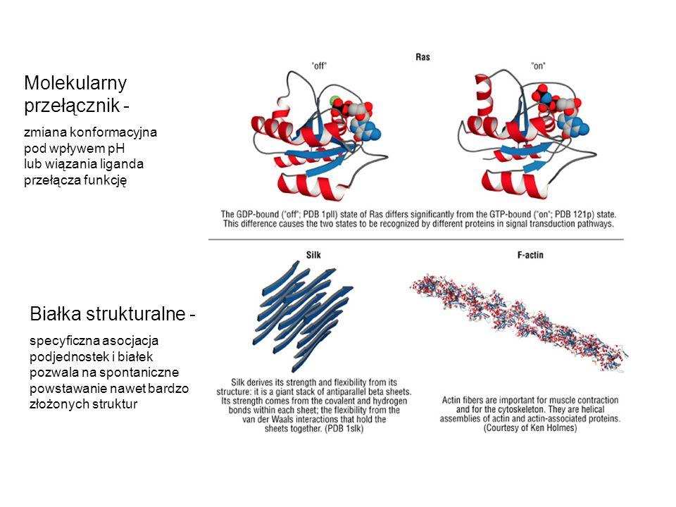 Molekularny przełącznik -