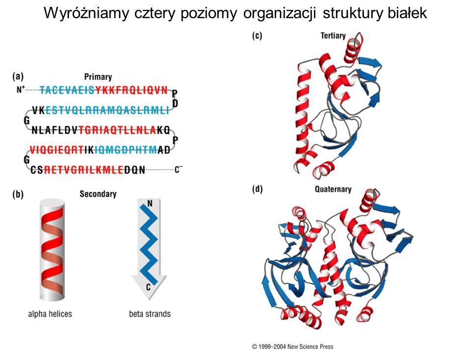 Wyróżniamy cztery poziomy organizacji struktury białek