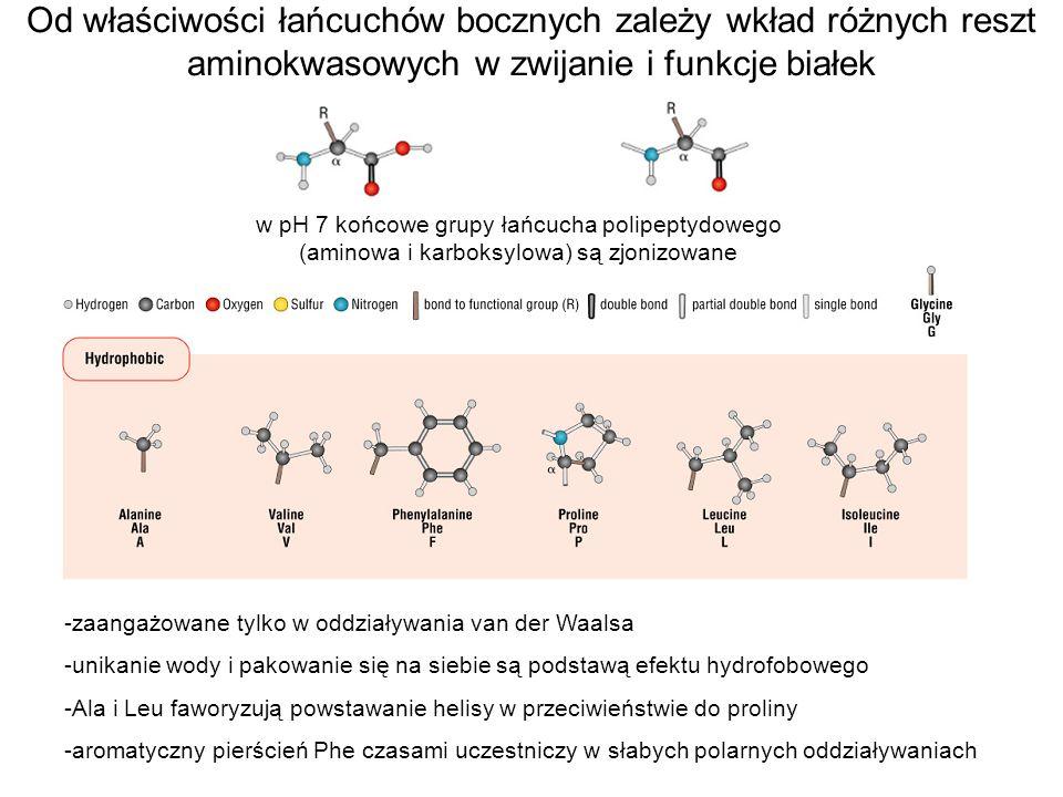 Od właściwości łańcuchów bocznych zależy wkład różnych reszt aminokwasowych w zwijanie i funkcje białek