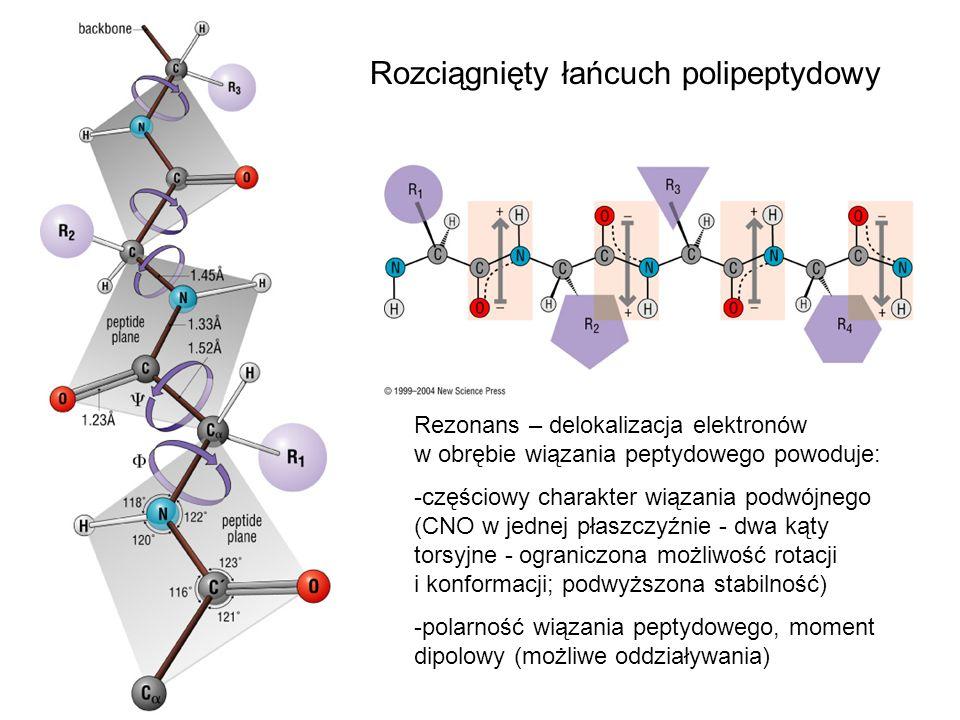 Rozciągnięty łańcuch polipeptydowy