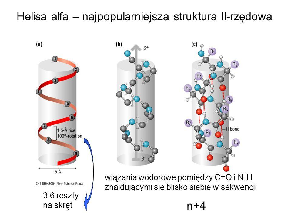 Helisa alfa – najpopularniejsza struktura II-rzędowa
