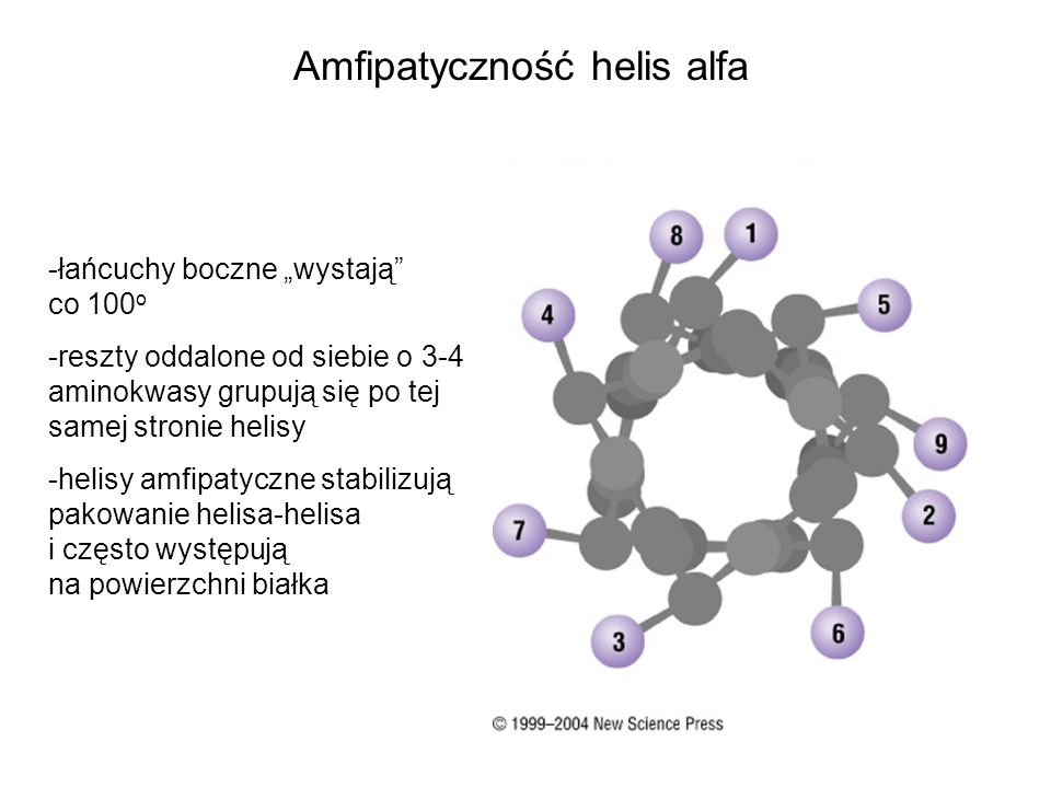 Amfipatyczność helis alfa