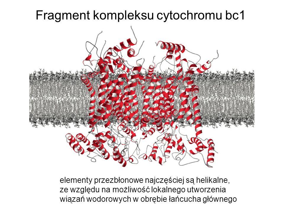 Fragment kompleksu cytochromu bc1