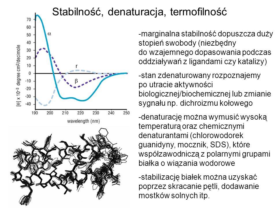 Stabilność, denaturacja, termofilność