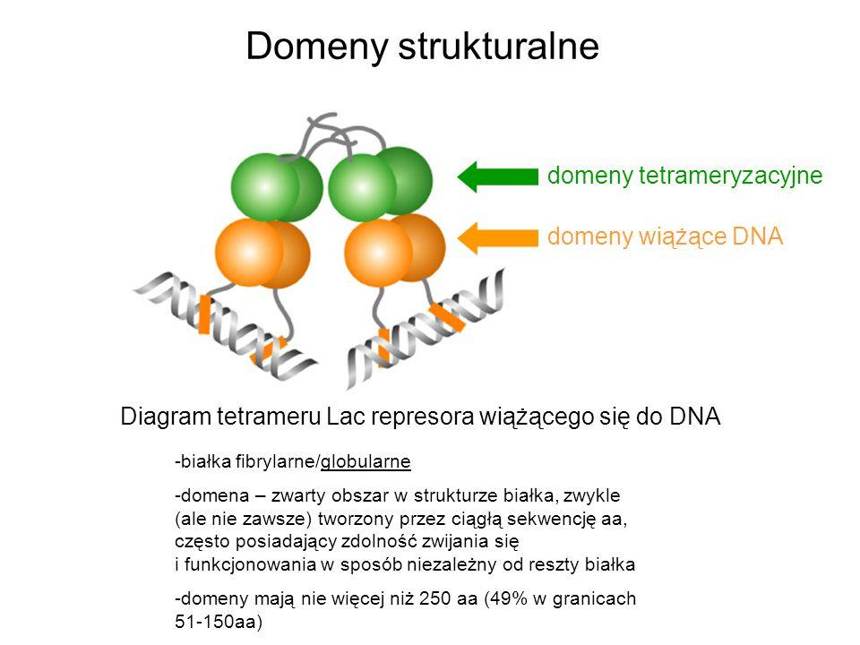 Domeny strukturalne domeny tetrameryzacyjne domeny wiążące DNA