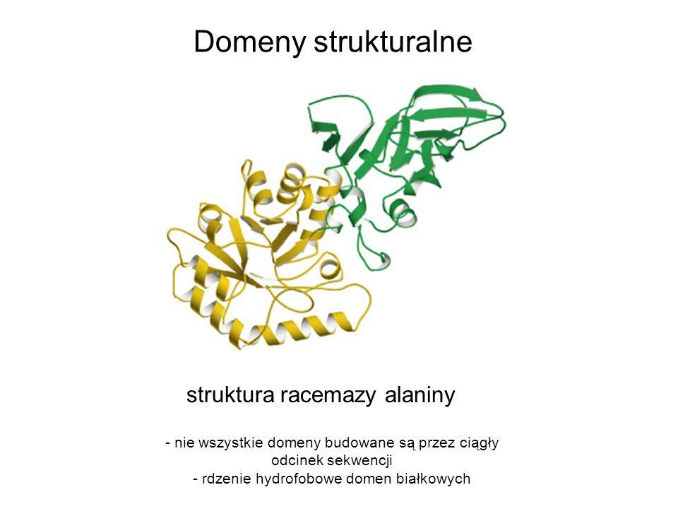 Domeny strukturalne struktura racemazy alaniny