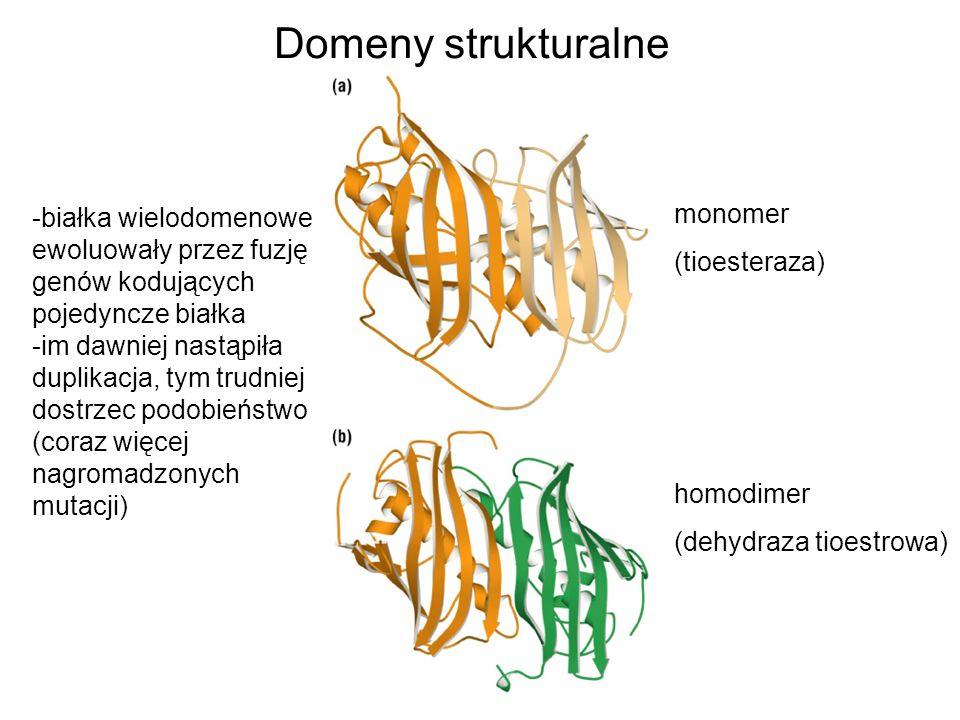 Domeny strukturalne monomer