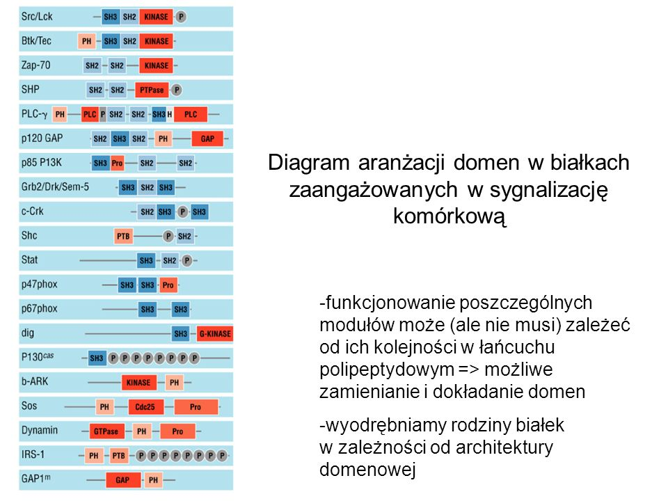 Diagram aranżacji domen w białkach zaangażowanych w sygnalizację komórkową