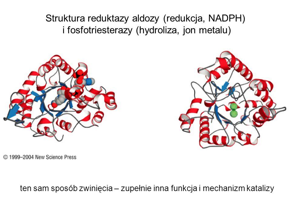 Struktura reduktazy aldozy (redukcja, NADPH)