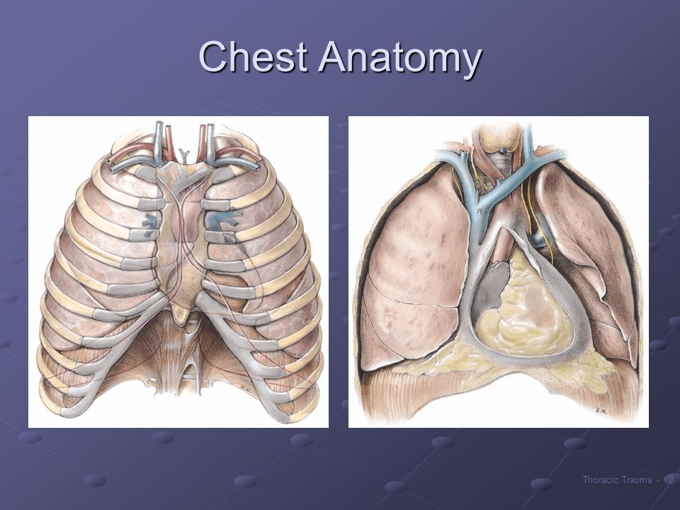 Chest Anatomy Many vital organs are crowded into this area. Trauma to this area is often life-threatening.