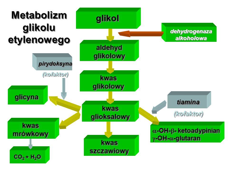 Metabolizm glikolu etylenowego dehydrogenaza alkoholowa