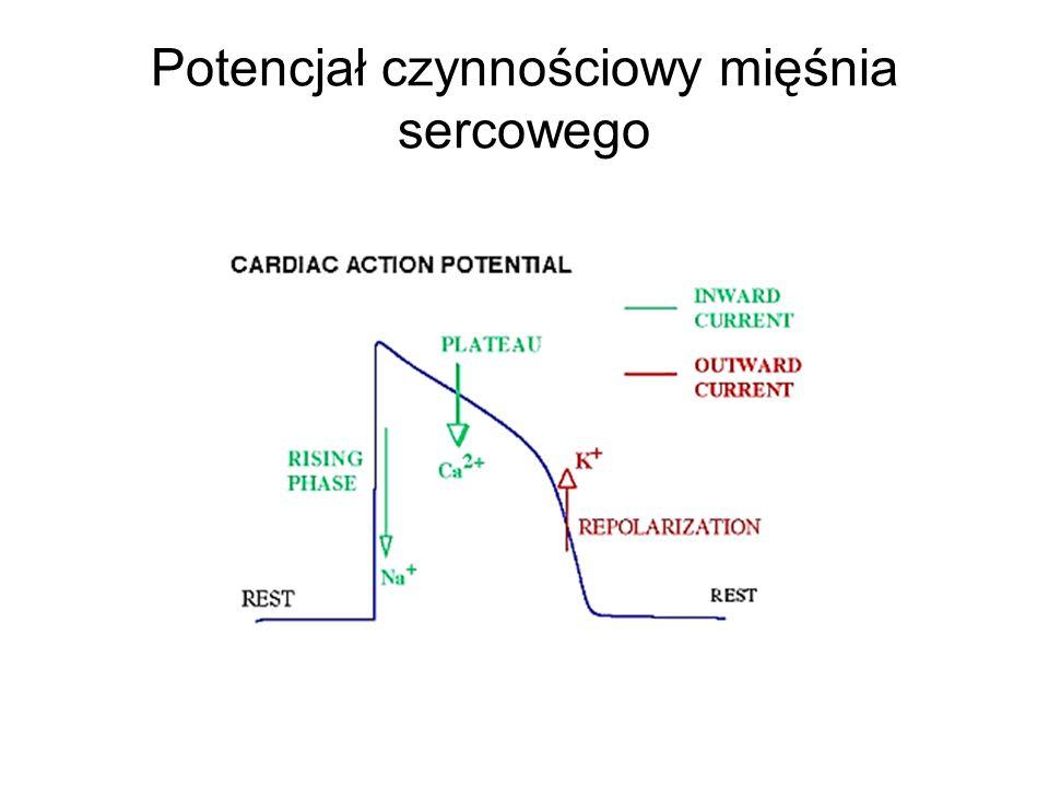 Potencjał czynnościowy mięśnia sercowego