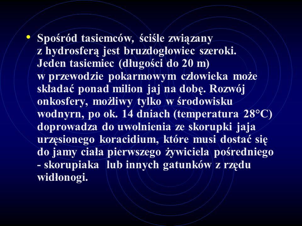 Spośród tasiemców, ściśle związany z hydrosferą jest bruzdogłowiec szeroki.