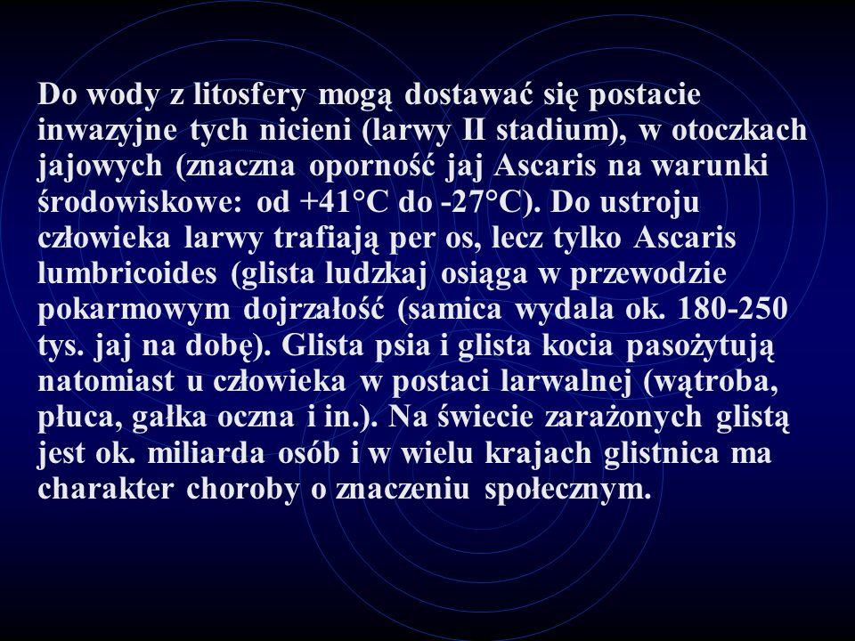Do wody z litosfery mogą dostawać się postacie inwazyjne tych nicieni (larwy II stadium), w otoczkach jajowych (znaczna oporność jaj Ascaris na warunki środowiskowe: od +41°C do -27°C).