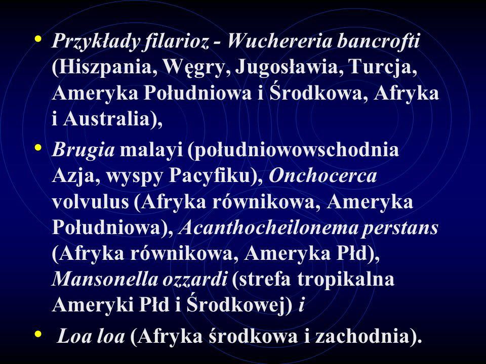 Przykłady filarioz - Wuchereria bancrofti (Hiszpania, Węgry, Jugosławia, Turcja, Ameryka Południowa i Środkowa, Afryka i Australia),