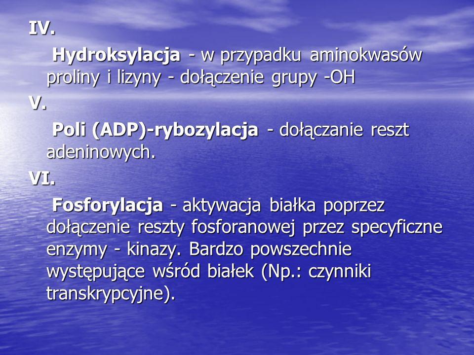IV. Hydroksylacja - w przypadku aminokwasów proliny i lizyny - dołączenie grupy -OH. V.