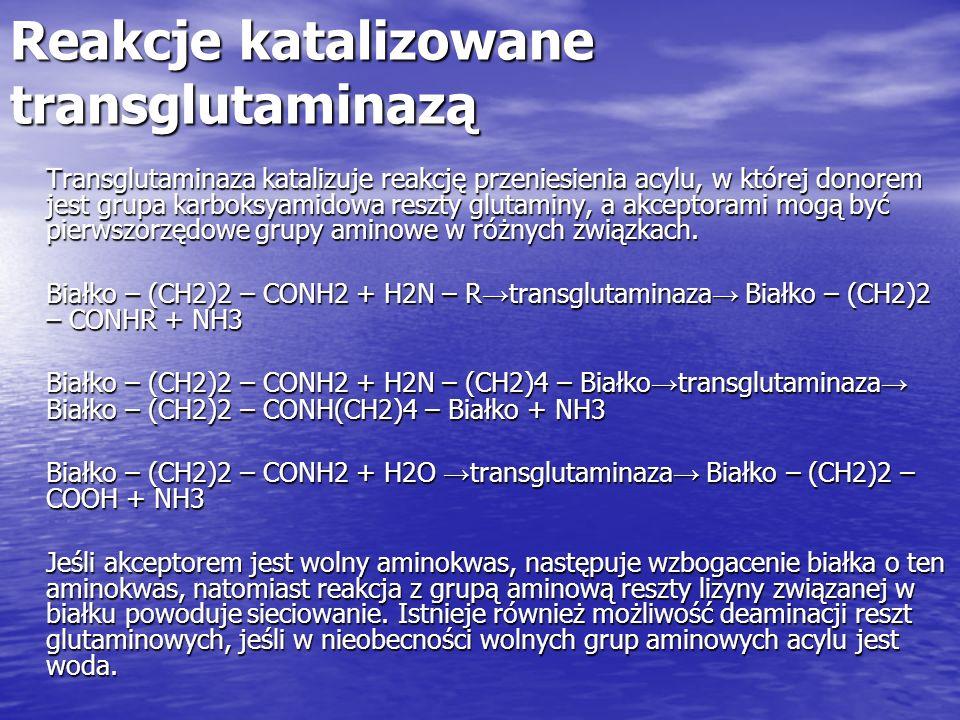Reakcje katalizowane transglutaminazą