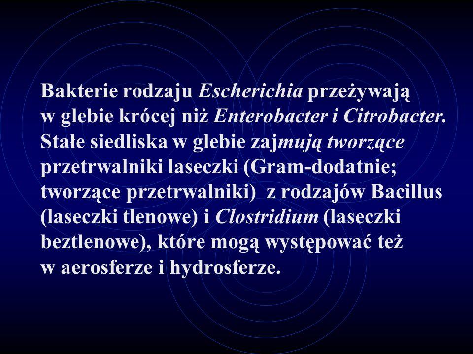 Bakterie rodzaju Escherichia przeżywają w glebie krócej niż Enterobacter i Citrobacter.