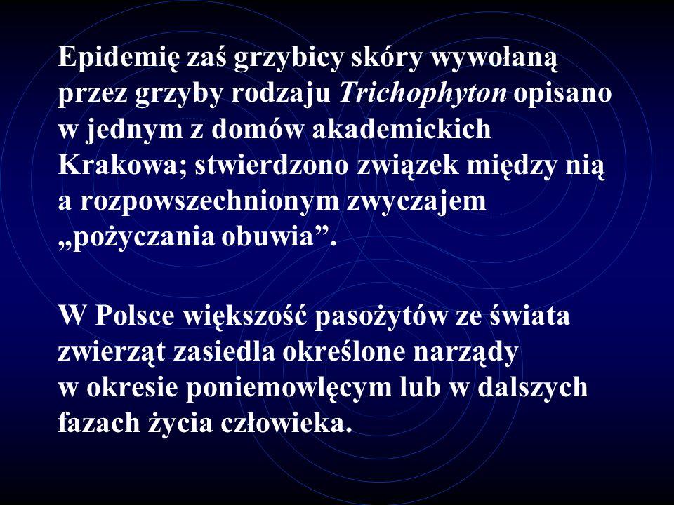"""Epidemię zaś grzybicy skóry wywołaną przez grzyby rodzaju Trichophyton opisano w jednym z domów akademickich Krakowa; stwierdzono związek między nią a rozpowszechnionym zwyczajem """"pożyczania obuwia ."""