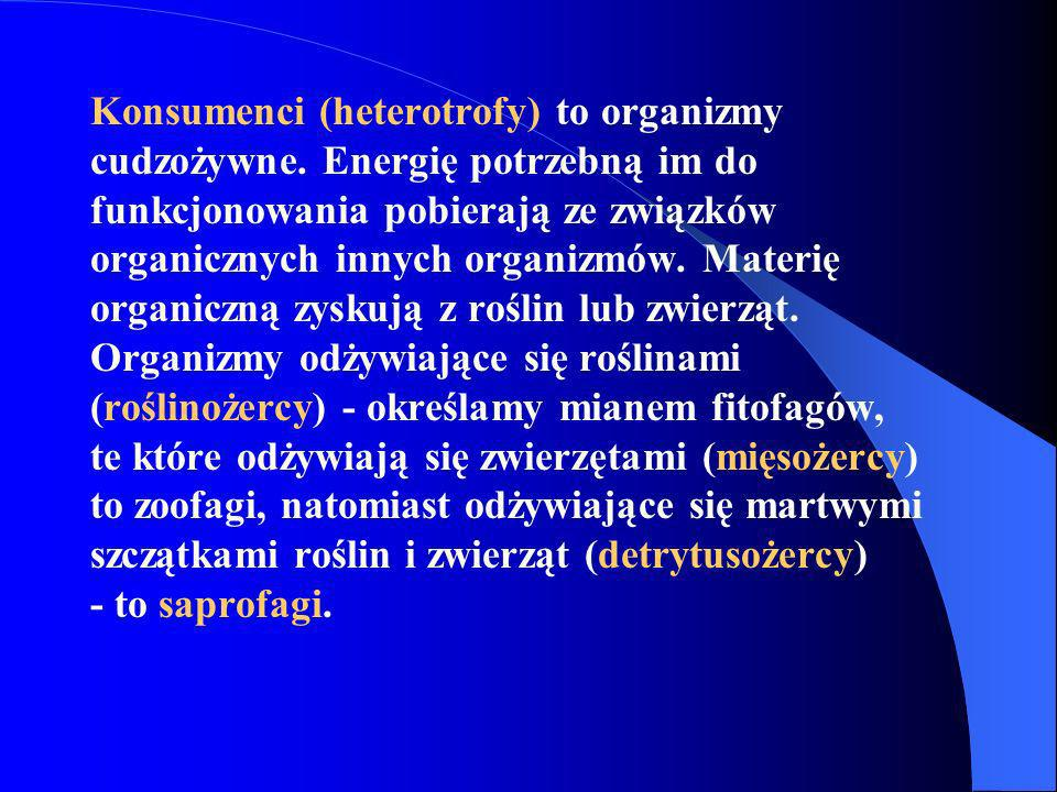 Konsumenci (heterotrofy) to organizmy cudzożywne